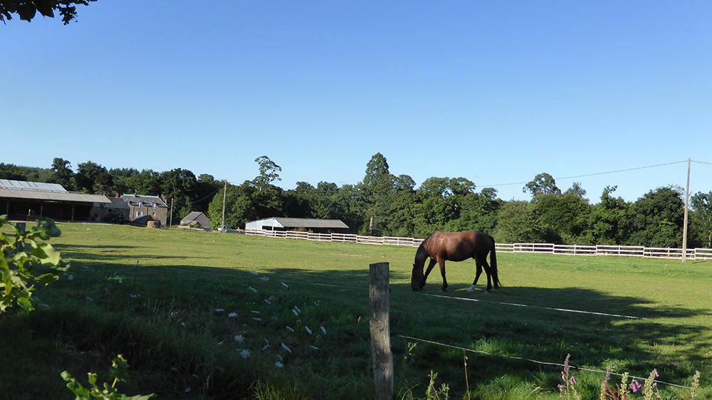 Pension pour chevaux Morbihan